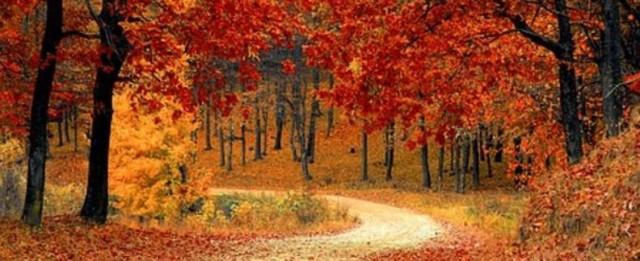 fall-1072821_340-1505484740-495